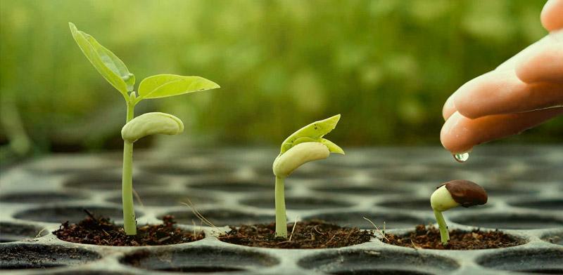 water-feminized-cannabis-seeds